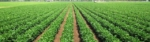 Grow Green Fertiliser Technologies